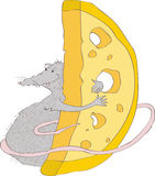 Illustration with the image of a gray rat, embracing  large piece  cheese. character. Vector Stock Image