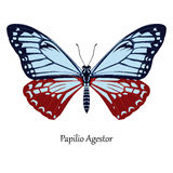 Illustration of Indian Swallowtail Butterfly - Papilio Agestor Stock Photos