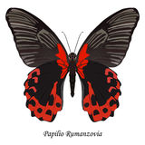 Illustration of Indonesia Swallowtail Butterfly - Papilio Rumanz Stock Images