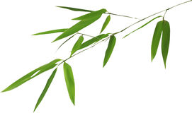 Illustration with isolated bamboo green branch Royalty Free Stock Photo