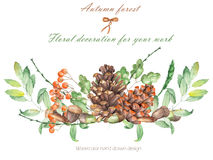An illustration isolated with the floral watercolor forest elements (oak acorns, cones, rowan) Royalty Free Stock Images