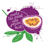Illustration of isolated purple passion fruit silhouette. Royalty Free Stock Images