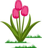 Isolated tulips flowers vector stock illustration