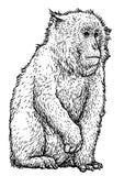 Illustration japonaise de macaque de singe de neige, dessin, gravure, encre, schéma, vecteur illustration stock