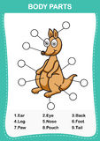 Illustration of kangaroo  vocabulary part of body. Write the correct numbers of body parts.vector Royalty Free Stock Photo