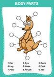 Illustration of kangaroo  vocabulary part of body Royalty Free Stock Photo