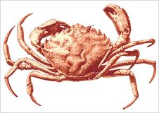 Illustration with a large crab. Illustration with a large red crab drawn by hand on a light background Stock Images
