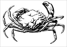 Illustration with a large crab. Vector Royalty Free Stock Images
