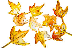 Illustration of a large number of maple leaves Stock Images