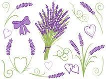 Illustration of lavender design elements Stock Image