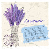 Illustration of lavender Royalty Free Stock Images