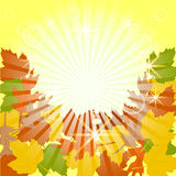 Illustration of leaves background. eps10 Royalty Free Stock Image