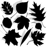 Illustration of leaves Royalty Free Stock Image