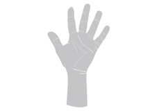 Illustration of left human hand. Royalty Free Stock Photography