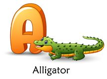 Letter A is for Alligator cartoon alphabet. Illustration of Letter A is for Alligator cartoon alphabet Stock Photography