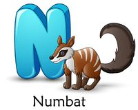 Letter N is for Numbat cartoon alphabet. Illustration of Letter N is for Numbat cartoon alphabet Stock Illustration