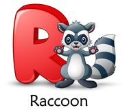 Letter R is for Raccoon cartoon alphabet. Illustration of Letter R is for Raccoon cartoon alphabet Stock Photos
