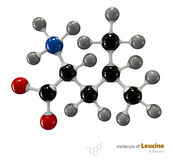 Illustration of Leucine Molecule isolated white background Royalty Free Stock Photos