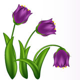Illustration of lilac bells stock images