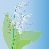 Illustration of lily of the valley Royalty Free Stock Images