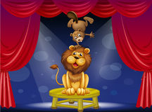 A lion and a beaver performing on the stage Stock Images