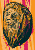 Illustration of lion. Royalty Free Stock Images