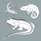 Illustration of lizard, chameleon, iguana in black and white col Stock Images