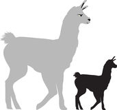 Illustration of a llama side view Royalty Free Stock Image