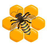 Illustration of logo for the theme of bees and honey Royalty Free Stock Images