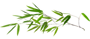 Illustration with  long green bamboo branch Royalty Free Stock Photos