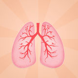 Illustration of lungs Stock Image