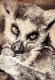 Illustration made with digital tablet, lemur in sepia Royalty Free Stock Photography