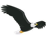 Illustration of majestic adult bald eagle flying. With white background Stock Images