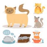 Illustration mammifère adorable de vecteur de caractère d'animal familier de chat de portrait de chaton de fourrure domestique fé illustration libre de droits
