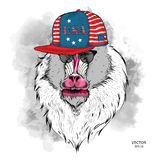 Illustration of Mandrill in the glasses, headphones and in hip-hop hat with print of USA. Vector illustration. Illustration of Mandrill in the glasses Stock Image