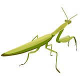 Illustration of Mantis. On a white background Royalty Free Stock Photography