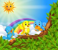Many bird on the tree branch with rainbow scene Stock Photography
