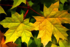 Illustration, maple leaves Stock Photography