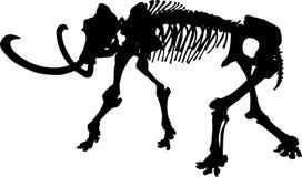 Skelett- silhouette för elefant som isoleras på vit Arkivbild