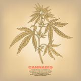 Illustration of medical herbs cannabis. Stock Photos