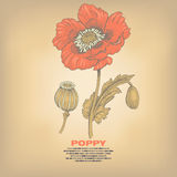 Illustration of medical herbs poppy. Poppy. Illustration of medical herbs.  image on vintage background. Vector Stock Image