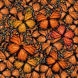 Migration of the monarch butterfly. Illustration of migration of the monarch butterfly Stock Images