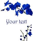 Illustration mit dunkelblauen Orchideen Stockfoto