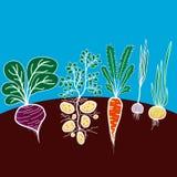 Illustration mit wachsendem Gemüse Stockfoto