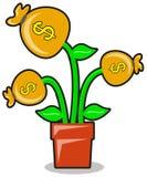 Illustration of money plant Stock Photo