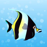 Illustration of Moorish Idol fish. Very high quality original trendy vector illustration of Moorish Idol fish. Zanclus cornutus Stock Images