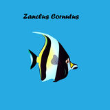 Illustration of Moorish Idol fish. Very high quality original trendy vector illustration of Moorish Idol fish. Zanclus cornutus Stock Image