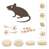 Illustration of Mouse and cells Stock Image