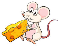 A mouse eating cheese Stock Photography