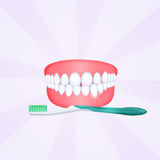 Mouth with clean teeth Stock Image